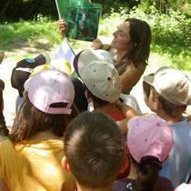 Balade Zoom rivière : identification de la faune observée