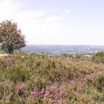 Les landes du Mont Gargan - Saint-Gilles-les-Forêts