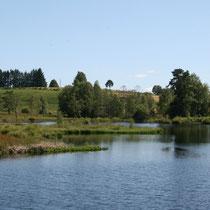 La tourbière de la Route Élevée - Beaumont-du-Lac