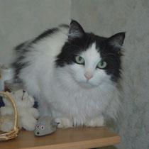 Le chat d'Eliane