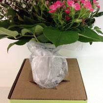 8- den Blumenstrauß in die Einführöffnung einführen-> Achtung: Das Wasser im Wasserbehälter dabei nicht nach oben herausdrücken!