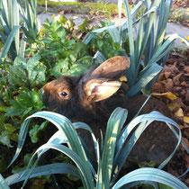Bartkaninchen Ellie im Garten am Randenblätter fressen