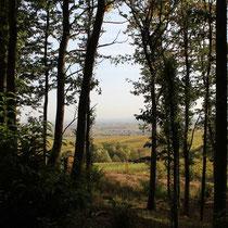 Waldrand unterhalb der Rietburg (Pfalz)
