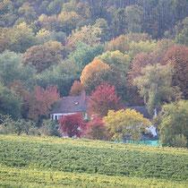 Herbstliche Farbenpracht im Wald unterhalb der Rietburg (Pfalz)