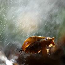 Limace sur un champignon (Haute-savoie)