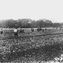 De bevrijders trekken vanaf Hommert, naar Amstenrade (op de achtergrond)