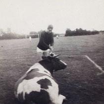"""Soms moest er een koe """"verwijderd""""worden van het speelveld !"""