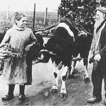 """Lei Kleintjens met zijn oudste dochter Neske,  Arme boeren hadden geen paard of os, en spanden hun melkkoe voor de kar Hij was overigens de enige boer in Hunnecum die een koe als trekdier had."""""""