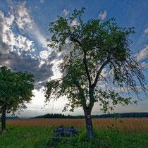 Abendstimmung mit schönen Wolken und Bäumen