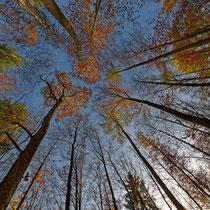 Herbstwald von unten