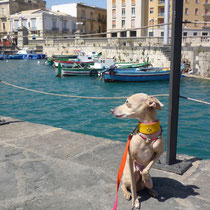 ...am Hafen von Syracusa.