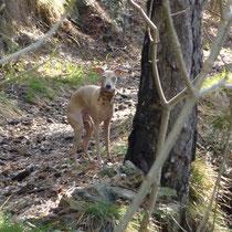 Annabelle im Wald.