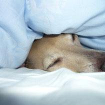 Erholungsschläfchen.......