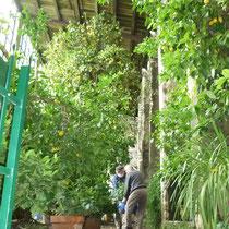 ....die Orangerie des Gartens.