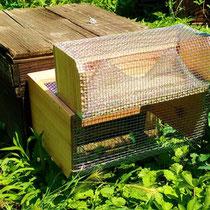 長野式スズメバチ捕獲器