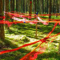 Waldkunst - Foto: Michael Wohl-Iffland