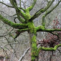 Grün auf Grau   -   Foto:   Volker Svensson