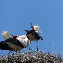 Storchen-Begrüßung, Bullenhausen, Gesine Schwerdtfeger