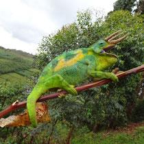 Dreihorn Chameleon - Foto: Gesine Schwerdtfeger