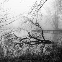 6. Platz 162 Pkt. - Nebel am Kuckucksteich - Foto: Gesche Andresen