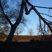 Neugrabener Heide, Winterblick - Foto: Gesine Schwerdtfeger