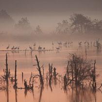 Foto: Ulrich Beeck