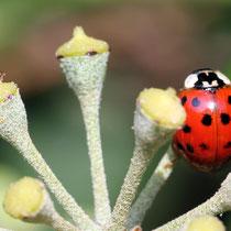 Duett im Garten - Foto: Volker Svensson