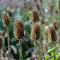 Arboretum - Foto: Willi Heinsohn