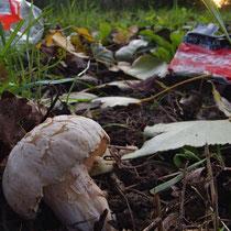 07 Pilz mit Müll im Hintergrund, Hamburg Entenweder, Foto Marina Staniek