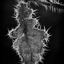 Eiskristalle - Foto: Holger Tobuschat