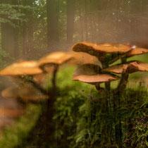 5 Foto: Gesche Andresen