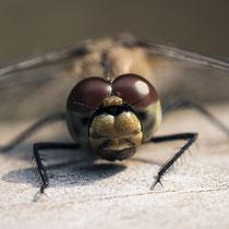 5. Platz 195 Pkt. Libelle - Foto: Dagmar Esfandiari
