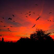 03 Der Tag geht zu Ende - Foto: Adolf Dobslaff