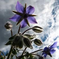 Blau - Foto: Michael Wohl-Iffland