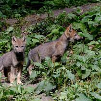 Nachwuchs im Wildpark Schwarze Berge - Foto: Romana Thurz