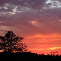 Sonnenuntergang in der Fischbeker Heide - Foto: Romana Thurz