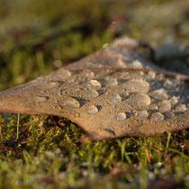 Wintermorgen   -   Foto:   Janine Brauneis
