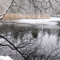 Teich in der Fischbeker Heide - Foto: Romana Thurz