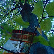 11 Trauriger Haribobaum, Hamburg Entenwerder, Foto Marina Staniek