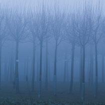 Nebelbäume Ehestorf   -   Foto:   Dagmar Esfandiari