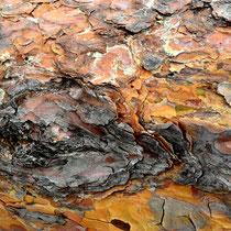 Kunst in der Natur, Baumrinde - Foto: Willi Heinsohn