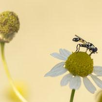 Fliege - Foto: Dagmar Esfandiari