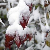 SnowWhite - Foto: Aida Thuresson