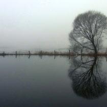 15 Nebelgrau in den überschwämmten Wümmewiesen - Foto: Gesine Schwerdtfeger