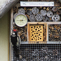 Specht an Insektenherberge - Foto: Hans Dieckmeyer