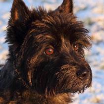 5. Platz 166 Pkt. Terrier - Foto: Uta Svensson