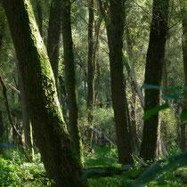 Abholzen des Vollhöfner Waldes im Oktober 2019? - Foto: Willi Heinsohn