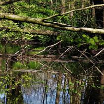 12. Platz 143 Pkt.  Naturspiegel - Foto: Lothar Boje