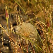 Grassy Field - Foto: Aida Thuresson