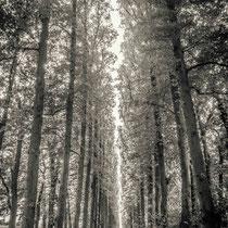 Allee, Ostfriesland - Foto: Gesche Andresen